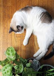 roundup pet friendly plants and growing tips curbly