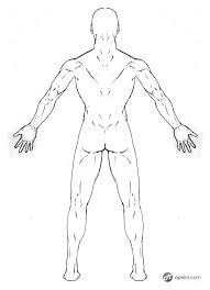 male anatomy drawing model back by gourmandhast on deviantart
