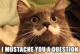 Mustache Cat Meme - cat meme made by yours truly album on imgur