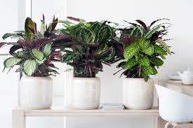 5 plants that thrive indoors service com au
