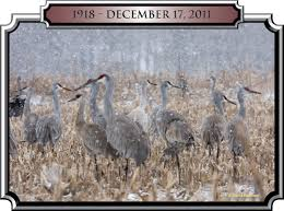 ky coalition for sandhill cranes