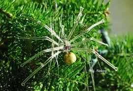 Seeking Tinsel Tinsel And The Spider Bug Of The Week