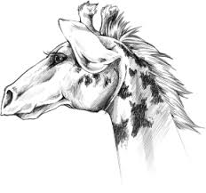 giraffe sketch by elysianimagery on deviantart