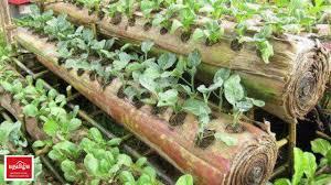 indonesia people won u0027t waste plantain trees youtube