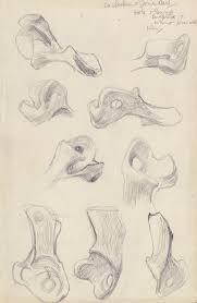 edward juler u0027life forms henry moore morphology and biologism