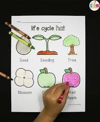 apple cycle hat stem laboratory