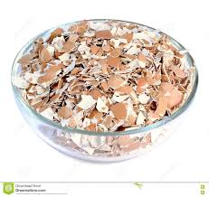 ground egg shells ground egg shells stock photo image 72489904