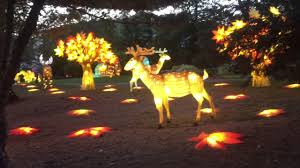when does the lights at the toledo zoo start luminous nights at the toledo zoo so beautiful youtube