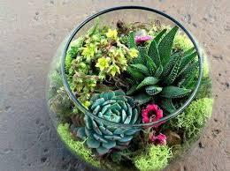 Succulent And Cacti Pictures Gallery Garden Design Succulent Terrarium Ideas Small Garden Ideas