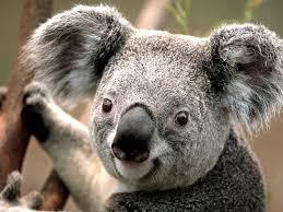 aniimal pics animal desktop wallpaper in high resolution for