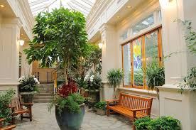 plants at home plants in home five ways indoor plants benefit your home mcmurray
