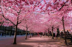 20 of the world s most marvelous streets shaded by flowers and trees