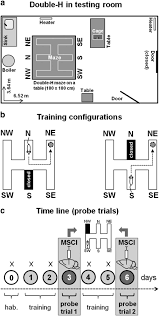 the ventral midline thalamus contributes to strategy shifting in a