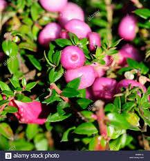 decorative plant ornamental plants leaf tree trees park