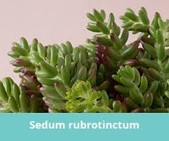 how to care for succulents indoors succulents and sunshine