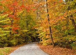 november 3 2016 when where to visit for fall color