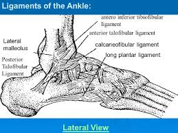 Anterior Tibiofibular Ligament Injury Topic Ankle Injuries Ppt Download