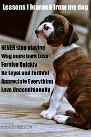 boxer dog sayings 14 best animal quotes images on pinterest animal quotes animals