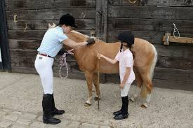 how to measure for carpet properly how to measure your horse s height accurately