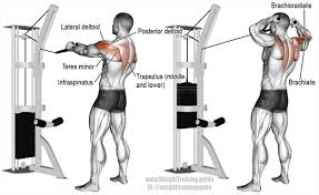 Rotator Cuff Injury From Bench Press Top Three Rotator Cuff Exercises With Restorative Potential