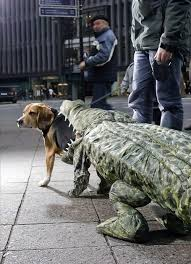 Dog Halloween Costumes 25 Funny Dog Costumes Ideas Funny Dog