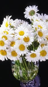 download wallpaper 720x1280 daisy flowers bouquet vase black