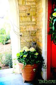Decorative Plants For Home Front Doors Splendid Plants Outside Front Door For Home