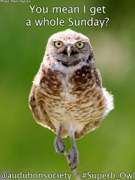 Superb Owl Meme - how to celebrate superb owl sunday memes included
