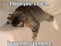 Lazy Meme - 17 animal memes only lazy people will understand cuteness