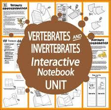 the 25 best characteristics of vertebrates ideas on pinterest