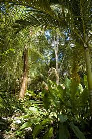 Tropical Rainforest Plant List - list of flowers found in the tropical rainforest hunker