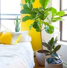 apartment therapy apartment therapy featuring our plants