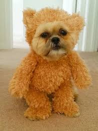Dog Halloween Costume Ideas 7 Dog Costumes Images Animal Costumes
