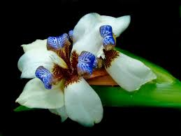 Flower Orchid 202 Best Flower Orchids Images On Pinterest Flowers Orchid