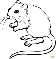 mouse coloring page free printable coloring pages