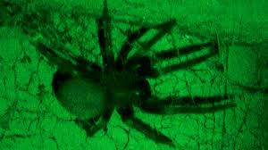 spider hunting in the middle of the night scary halloween horror