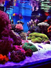 Saltwater Aquascaping Best 25 Reef Aquascaping Ideas On Pinterest Nano Reef Tank