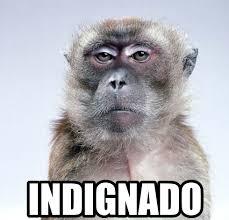Memes De Nalgones - memes chistosos de monos imagenes chistosas