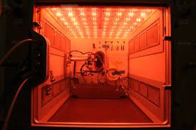Plants That Grow In Dark Rooms by First Flower Grown In Space Station U0027s Veggie Facility Nasa