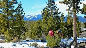 forest service sets christmas tree cutting dates in colorado cbs