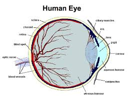 Blind Spot In Eyes Photobiology Of The Human Lens