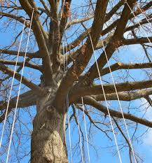 adventure tree what is recreational tree climbing