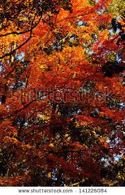 northern michigan fall colors stock photo 141226105 shutterstock