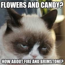 I Hate Valentines Day Meme - 12 best grumpy cat images on pinterest ha ha funny stuff and