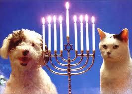 cat menorah meet the 8 dogs of hanukkah rover