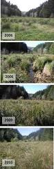 native wetland plants tidal wetland vegetation in the lower coos watershed partnership