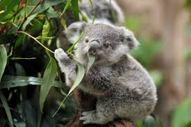 imagenes animales australia 12 australian animals and where to find them live better