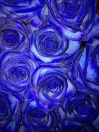 Blue Roses For Sale Blue Roses Blue Rose 2011 Fallen Heroes In Blue Brian Rose