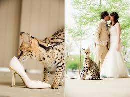 columbus zoo wedding columbus zoo wedding brianne anthony erica