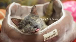 Blind Cat Sanctuary Blind Cat Rescue U0026 Sanctuary Inc Live Stream Youtube